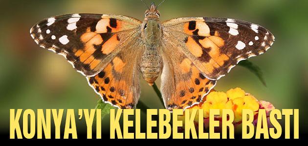 Konya'yı kelebekler bastı