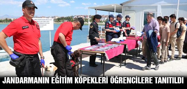 Jandarmanın eğitim köpekleri öğrencilere tanıtıldı