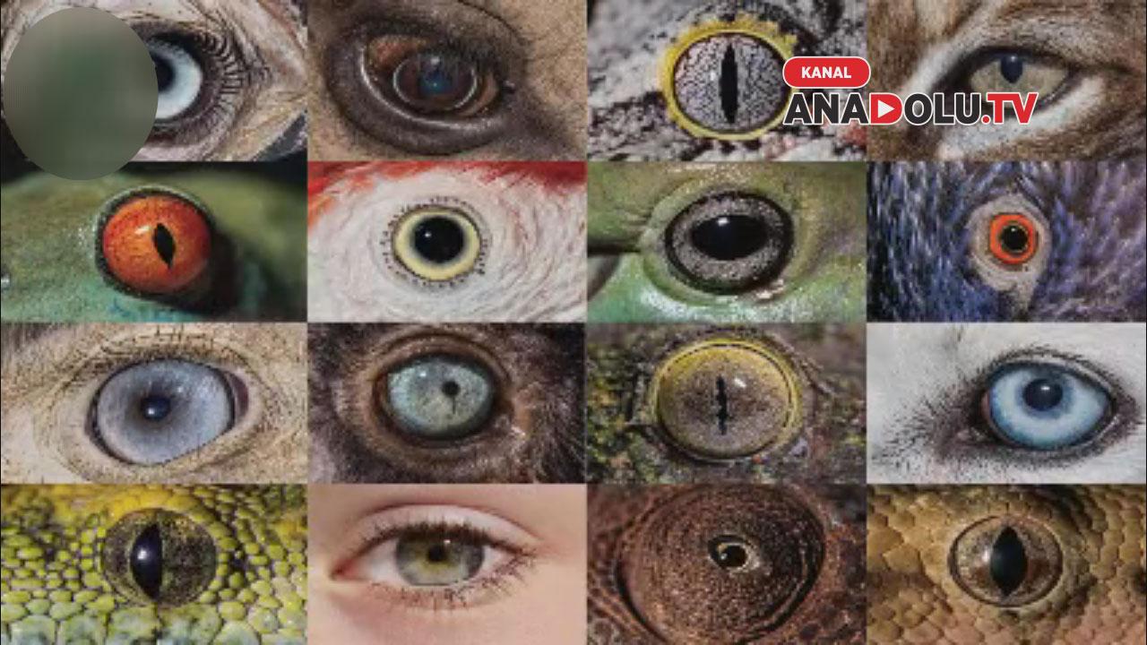 Hayvanların gözünden Dünya